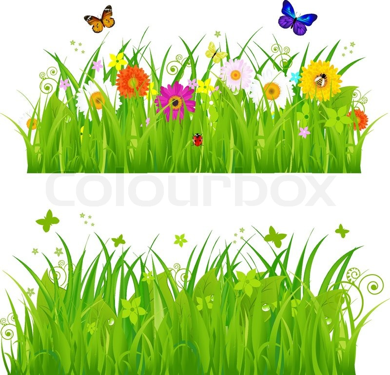 green grass with flowers and insects isolated on white background