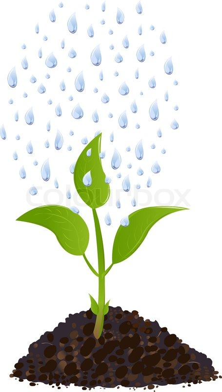 Young plant with rain drops, Isolated On White | Stock ...