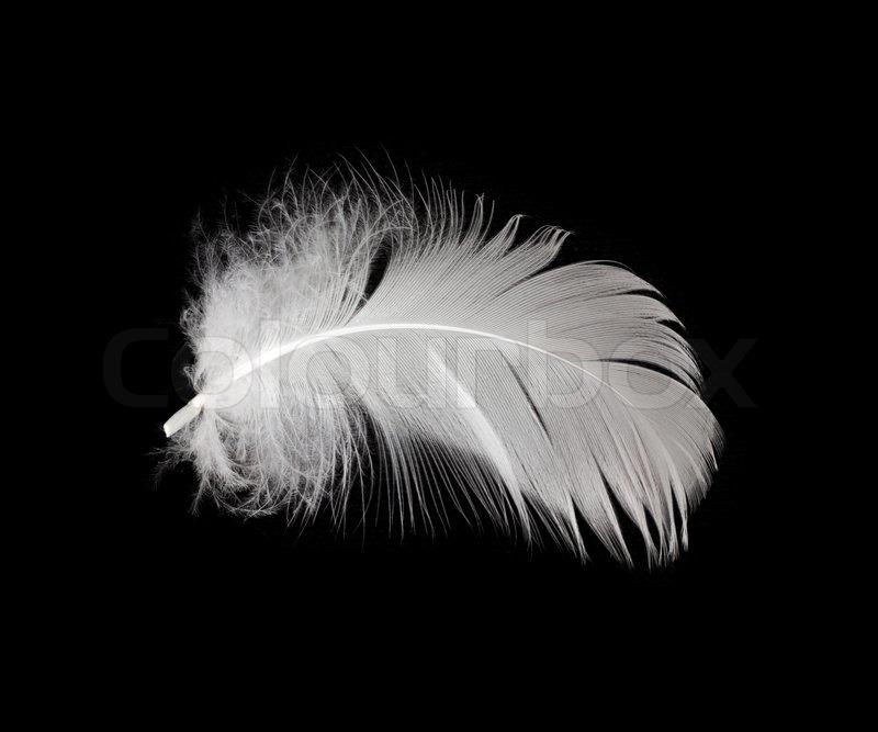 white feather isolated on white background stock photo