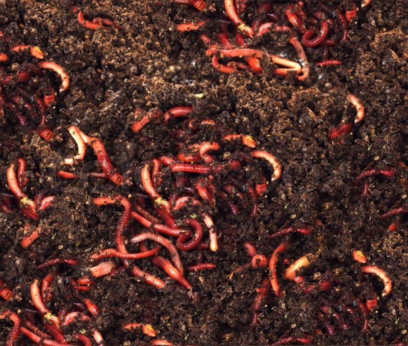 Kleine Rote Würmer Bad