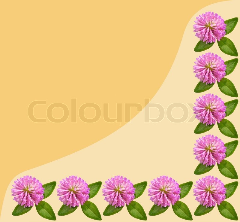 Frame of flowers and green leaves of clover isolated on yellow background, stock photo