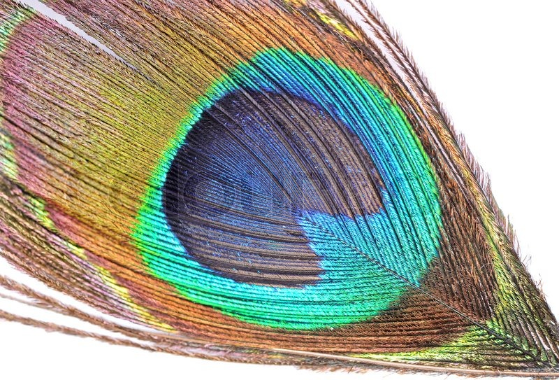 The abstract color background - peacock feather | Stock ...