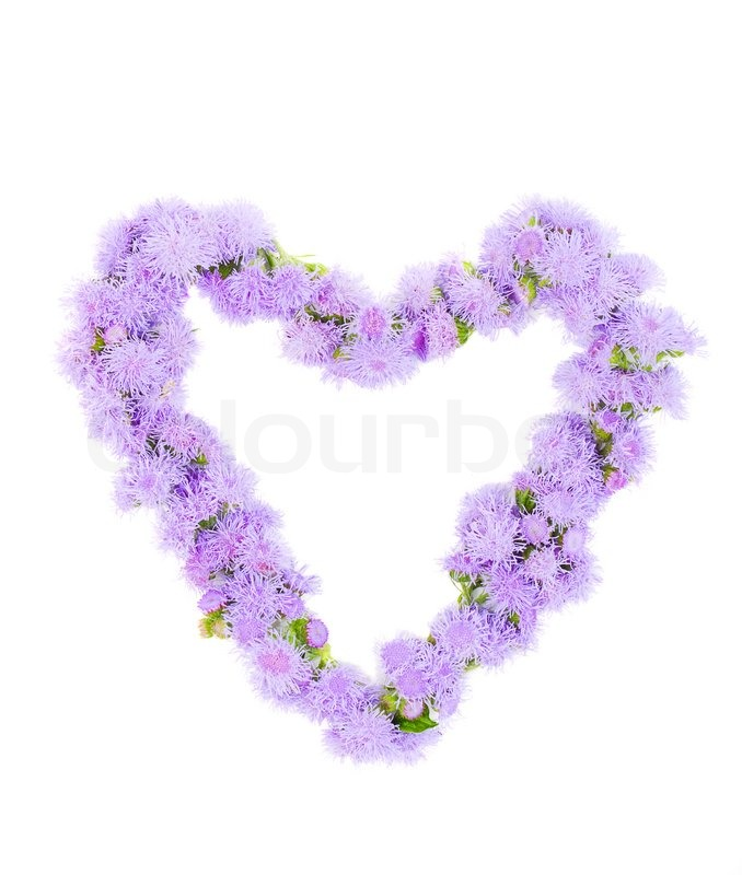 Stock image of 'The beautiful frame heart of purple flowers'