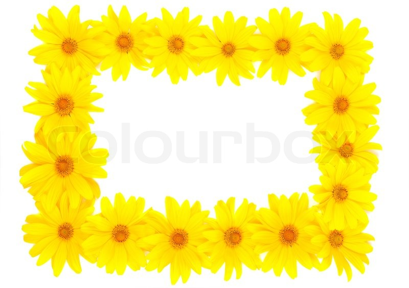 the beautiful frame of yellow flowers stock photo colourbox - Yellow Frame