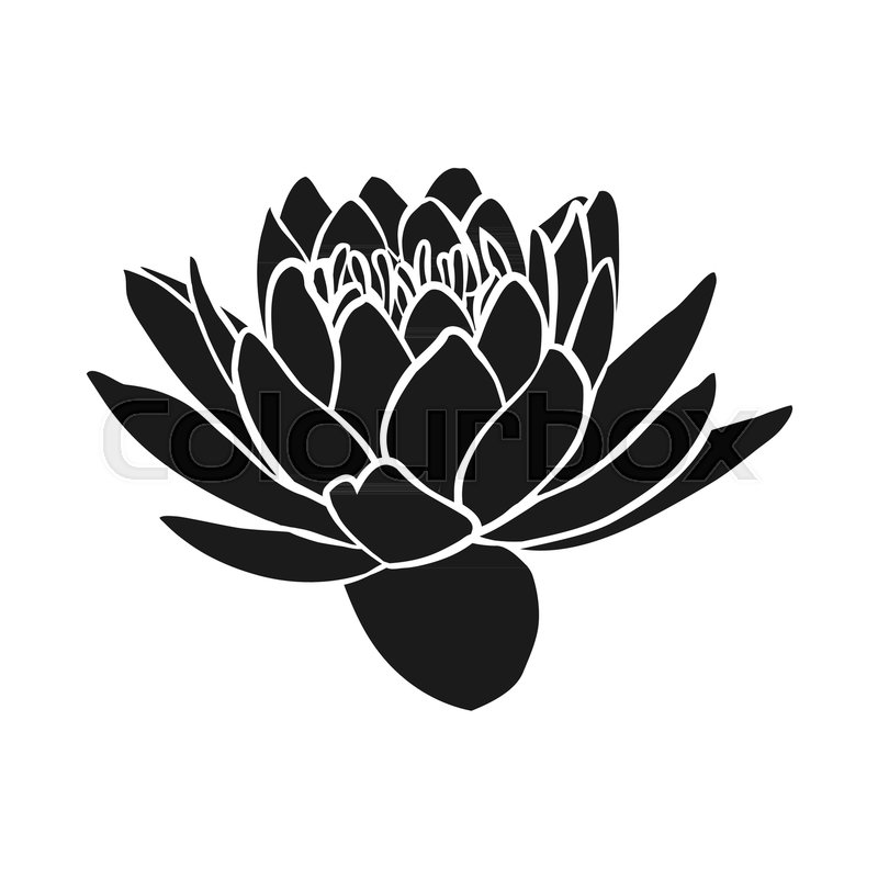 Black Silhouette Of Lotus Flowers Icon Stock Vector Colourbox