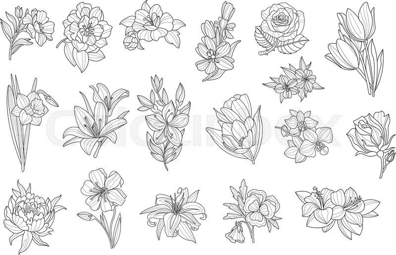 set of beautiful monochrome flowers