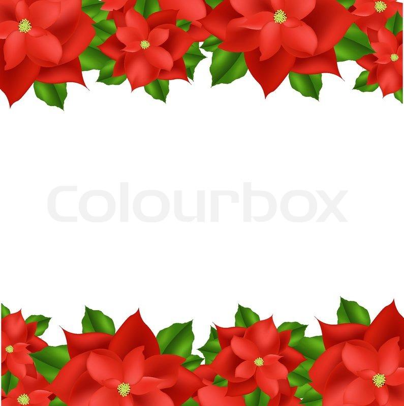 Poinsettia Illustraties en vectors