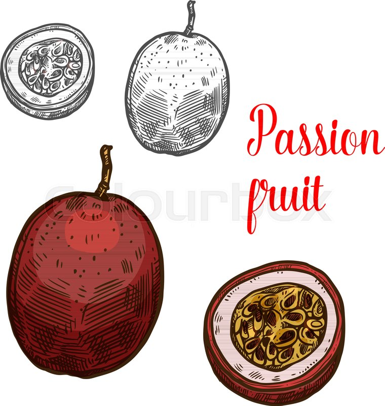 Passion Fruit Fruit Color Sketch Icon Vector Isolated Symbol Of