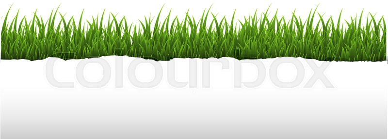 grass border no background clear green grass and ripped paper border transparent background with gradient mesh vector illustration stock colourbox