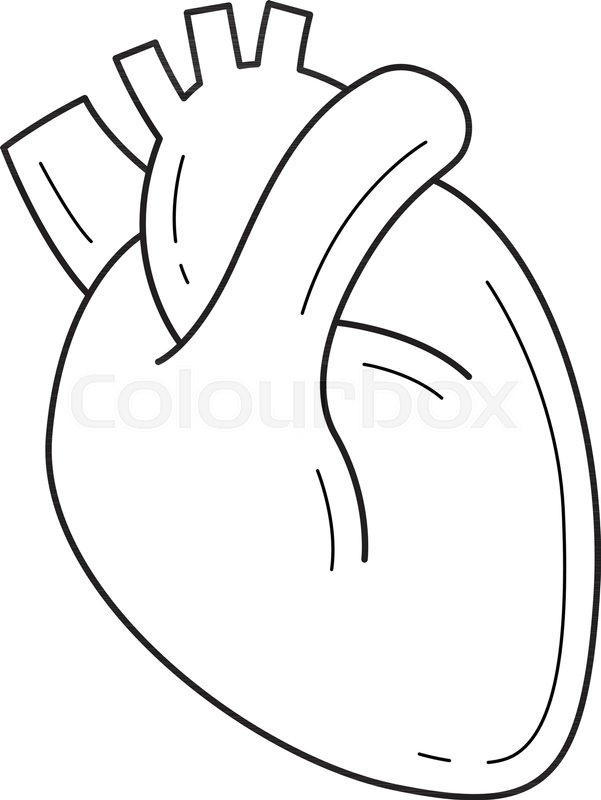 human heart vector line icon isolated on white background medical rh colourbox com human heart vector graphics human heart vector art