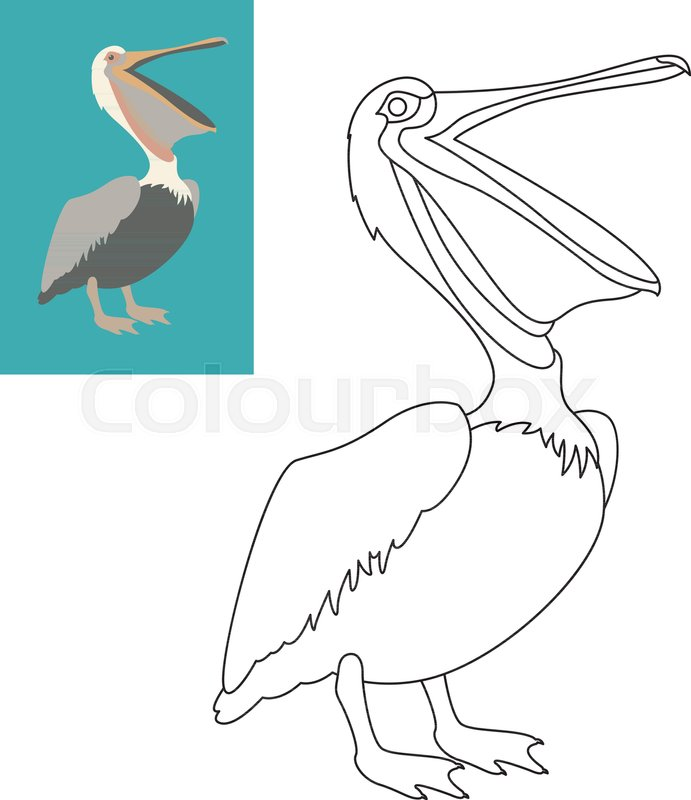 pelican vector illustration flat style coloring page outline stock
