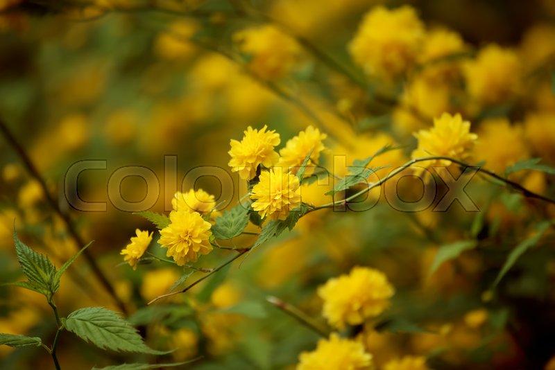 Summer yellow flowers vintage hipster dark background stock photo summer yellow flowers vintage hipster dark background stock photo colourbox mightylinksfo