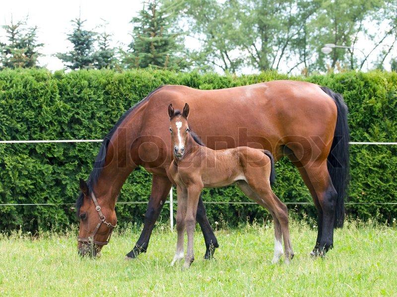 Newborn horse standing - photo#25