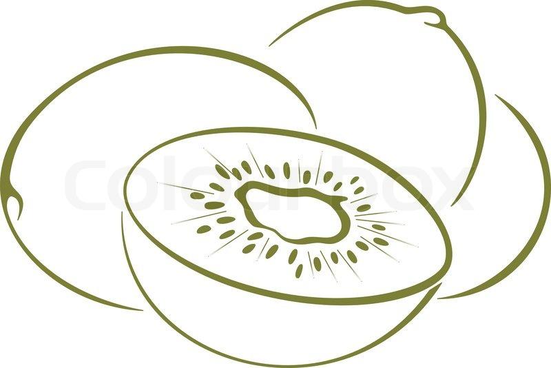 Line Drawing Kiwi : Food kiwi fruit green monochrome pictogram on a white