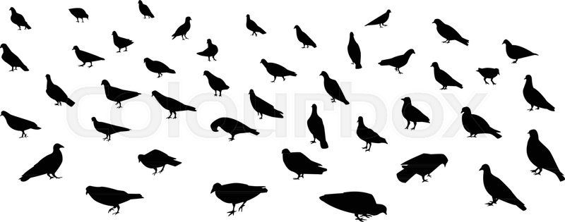 Group of walking dove and pigeon in     | Stock vector