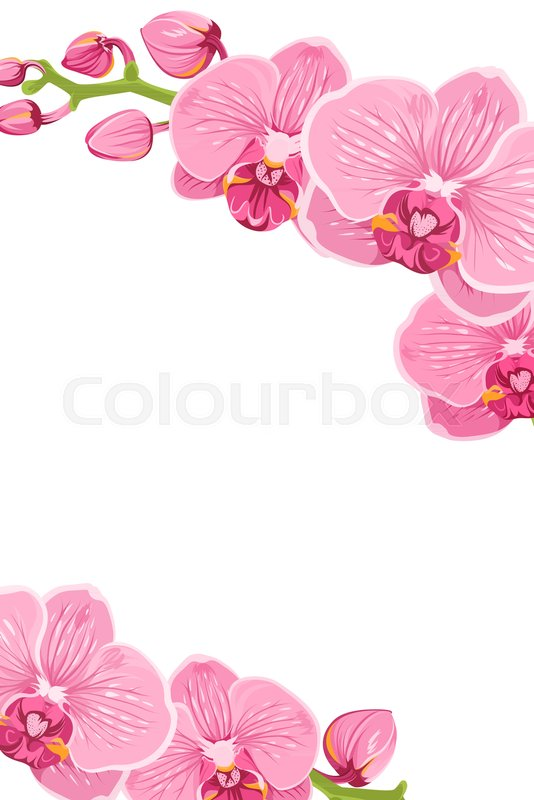 Pink Purple Bright Exotic Orchid Stock Vector Colourbox
