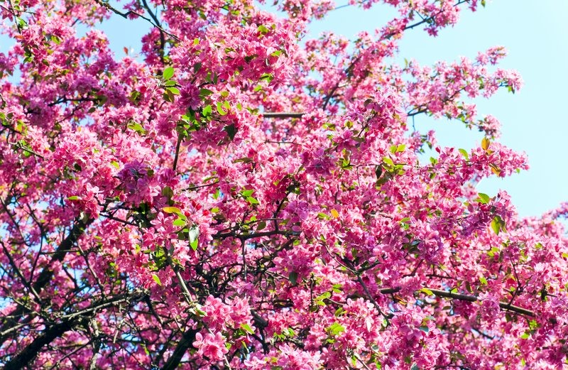 blomstre