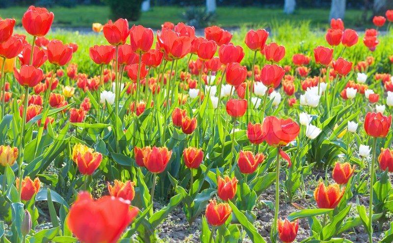 Bilderesultat for blomster