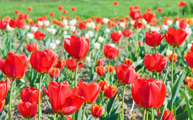 Background Images Flowers Nature Flowers nature background
