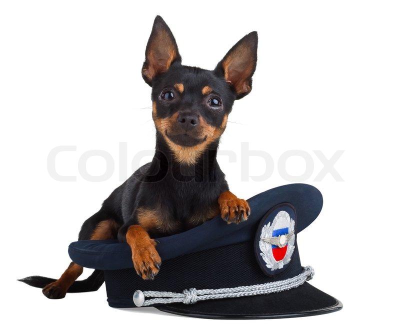 Es Ist Sehr Klein Als Charmante Hund Stockfoto