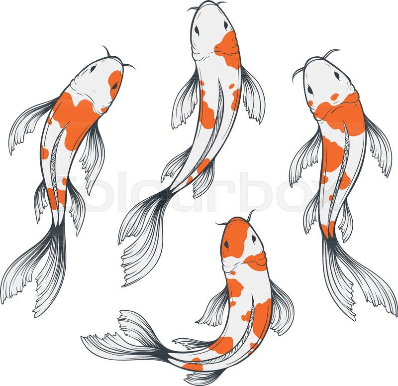 Set Of Four Traditional Japanese Koi Stock Vector Colourbox