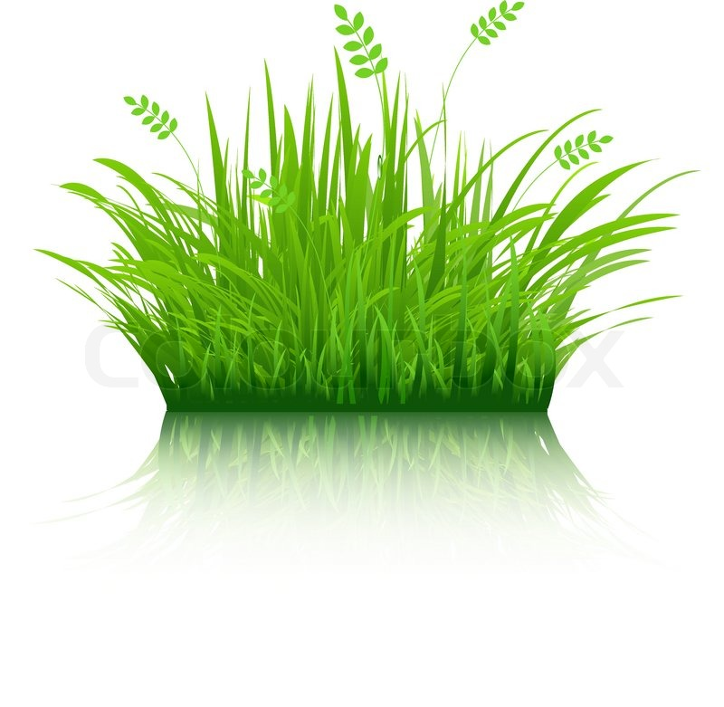 eco grass isolated on white background vector