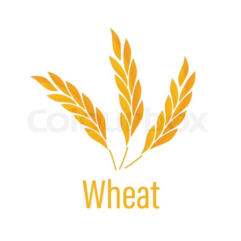 Gluten free icon  Ears of Wheat icon      | Stock vector