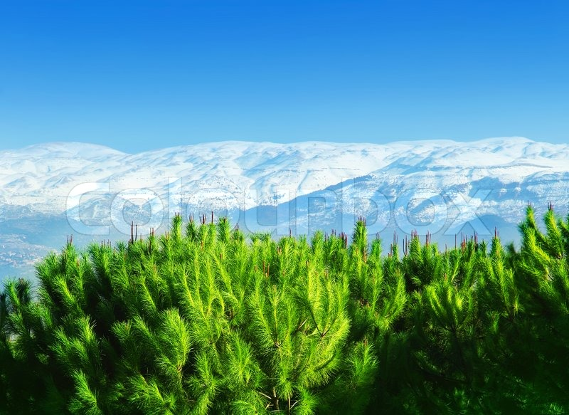 beautiful mountains landscape with green pine trees forest