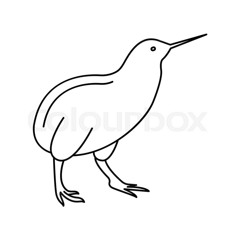 Kiwi bird icon. Outline kiwi bird vector icon for web design ...