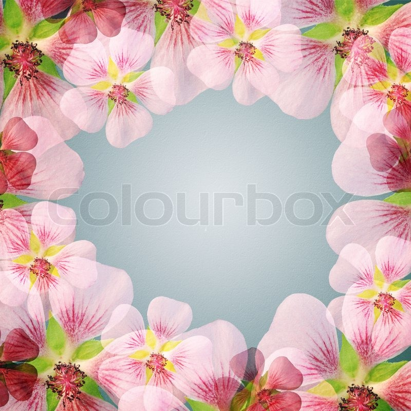 Pink flower frame with copy space | Stock Photo | Colourbox