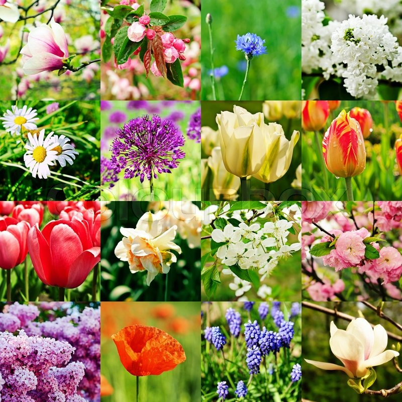 Different Kind Of Spring Flowers Stock Photo Colourbox