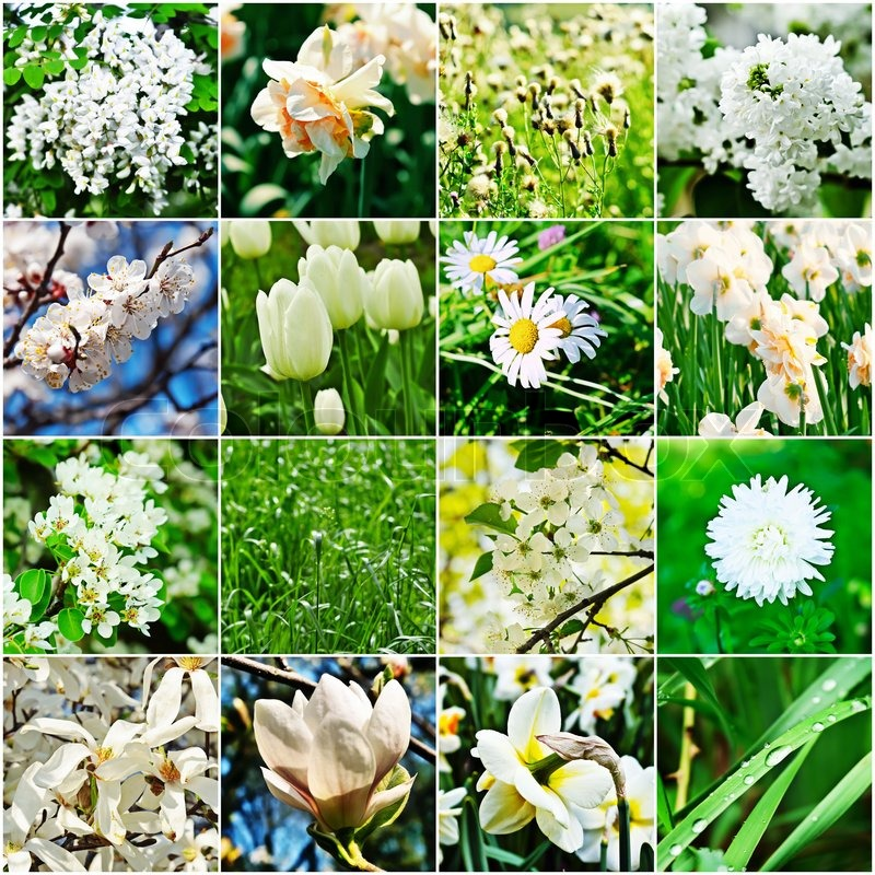 Different kind of white flowers stock photo colourbox mightylinksfo