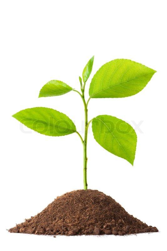 Oak Tree Property Management