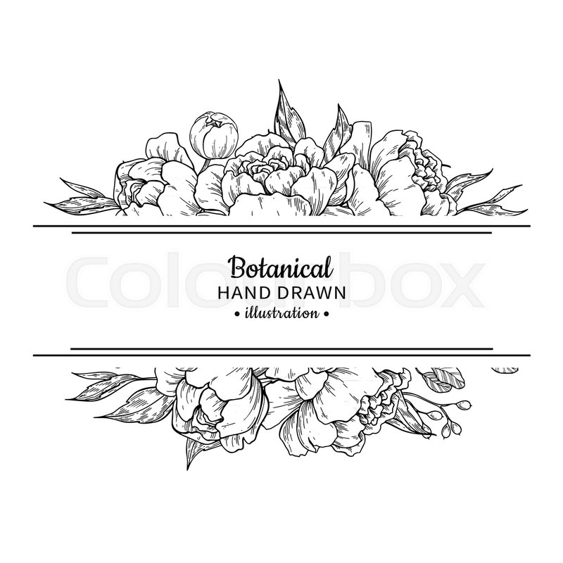 Wedding Flower Line Drawing : Vektor festlighed planter stock colourbox