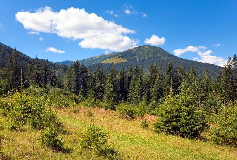Stock foto af 'sommer udsigt over bjergene med lysning og nåleskov'