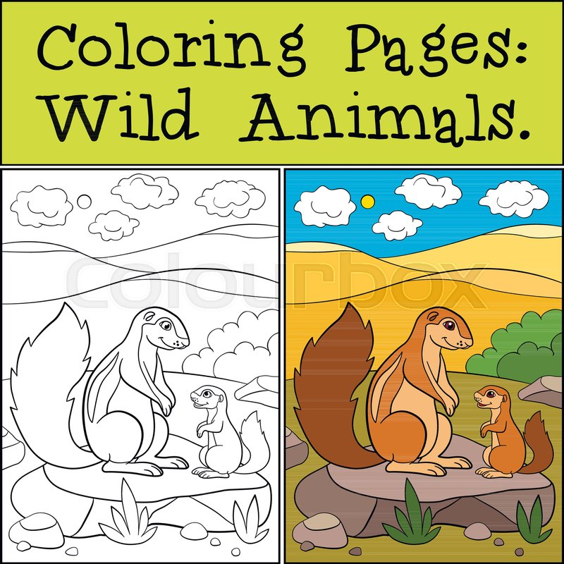 Coloring Pages Wild Animals Mother Xerus With Her Little Cute Baby Vector
