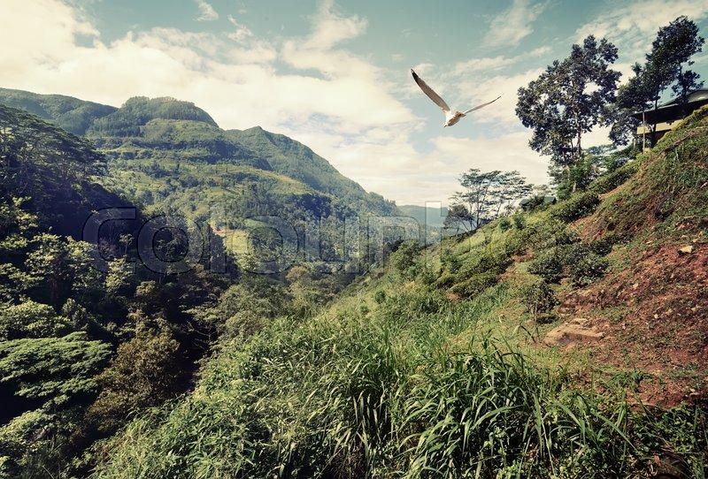 Big bird flying over mountains of Sri Lanka, stock photo