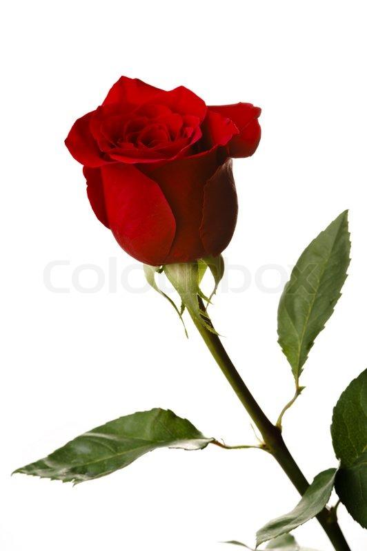 Rose matchmaking price