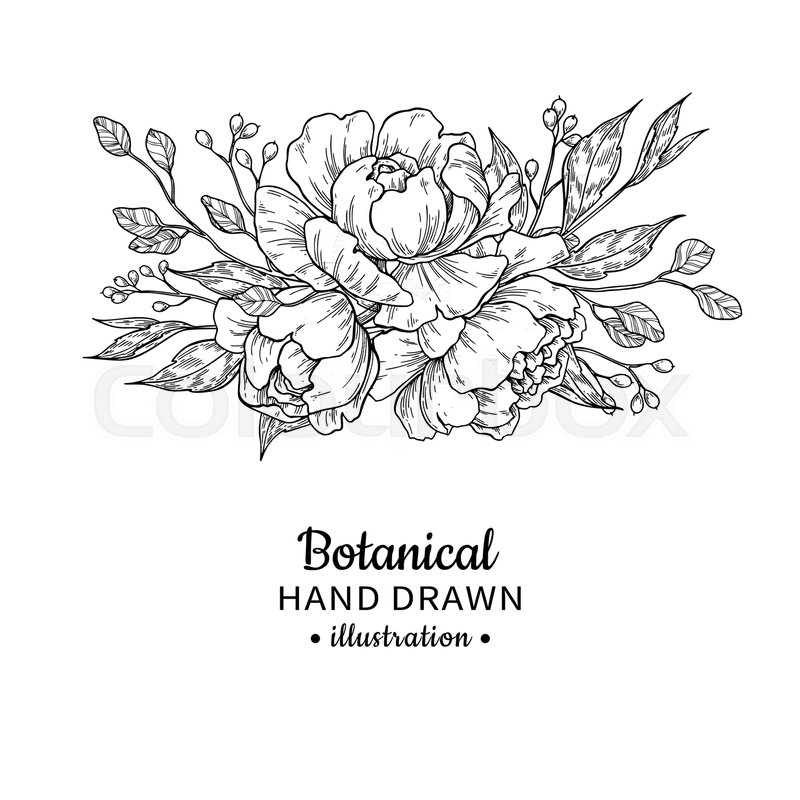 Wedding Flower Line Drawing : Vintage flower bouquet vector drawing peony rose