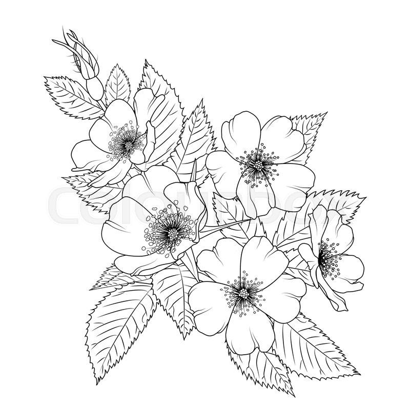 Cherry Blossom Flowers Vector Set Stock Illustration