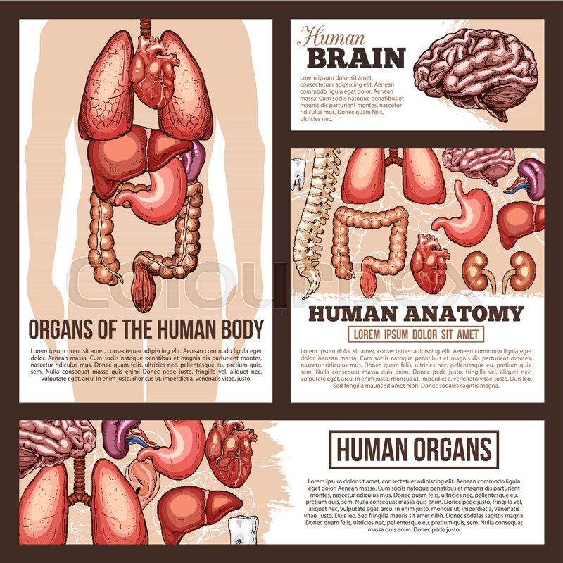 Anatomy Of Human Internal And External Organs Banner Template Set