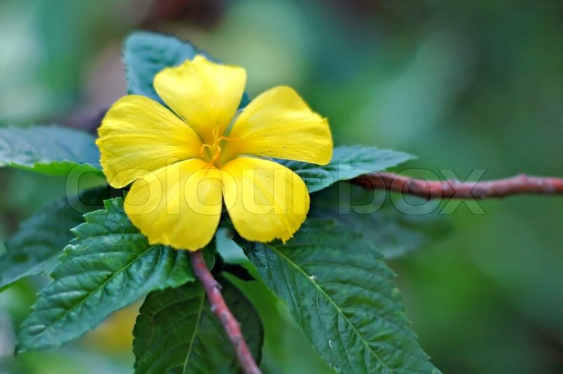 A Yellow Flower In A Mass Of Green Stock Photo Colourbox