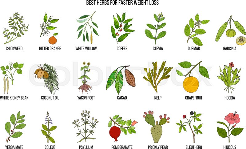 Best natural medicine for weight loss