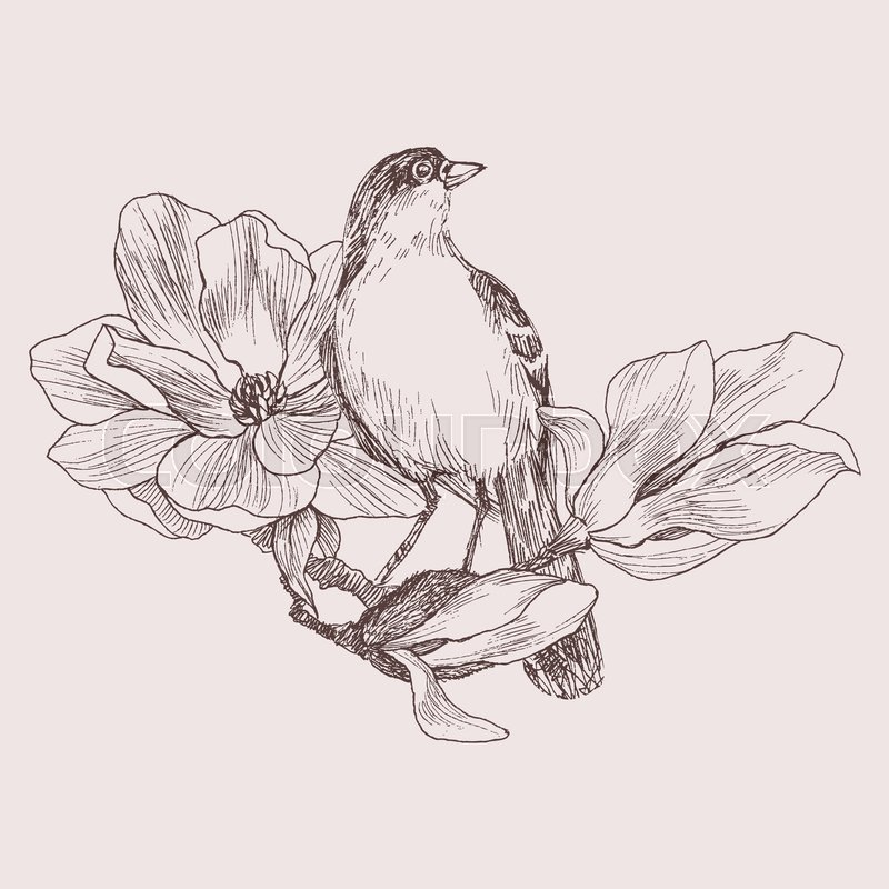 Vector Illustration Of Hand Drawn Bird On Magnolia Blooming Brunch Graphic Style Beautiful Engraving Retro