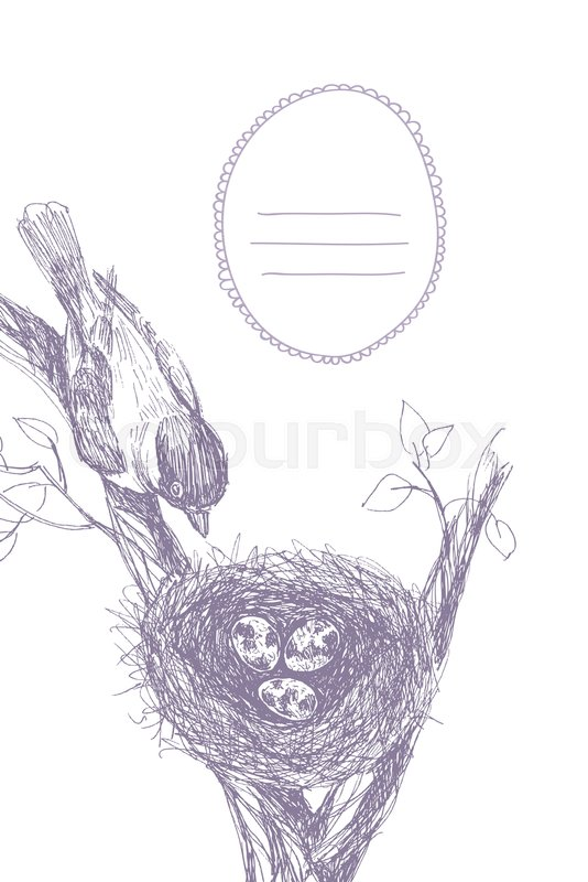 Vector Illustration Of Hand Drawn Nest With Spotted Eggs And Bird Graphic Style Beautiful Place For Text In Frame