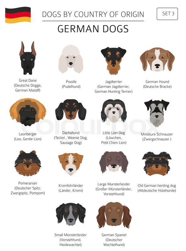 dogs by country of origin german dog breeds infographic template