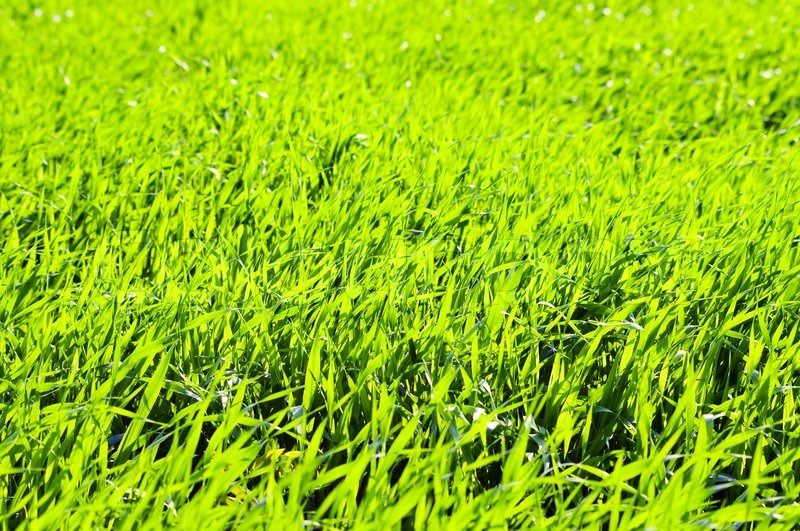Ideal Green grass with day light close up background | Stock Photo  ZW22