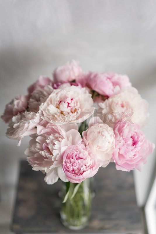 Cute and lovely peony many layered petals bunch pale pink peonies flowers light gray background wallpaper vertical photo stock photo colourbox cute and lovely peony many layered petals bunch pale pink peonies flowers light gray background wallpaper vertic