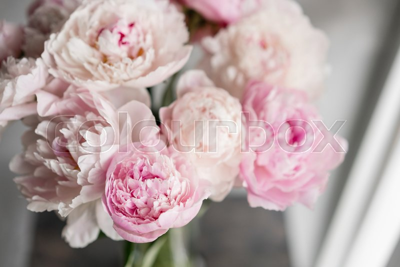 Cute and lovely peony many layered petals bunch pale pink peonies cute and lovely peony many layered petals bunch pale pink peonies flowers light gray background wallpaper vertical photo stock photo colourbox mightylinksfo