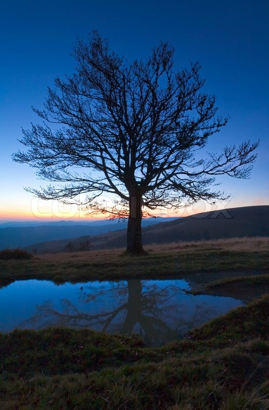 Stock image of 'Lonely autumn naked tree on night mountain hill top in last sunset light and its reflection in a puddle'